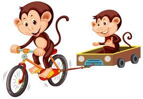 Monkey riding cykel på vit bakgrund