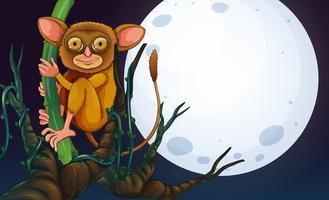 Tarsier auf dem Baum in der Nacht