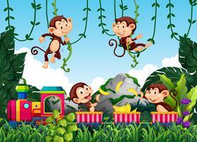 Macaco em estado selvagem