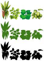 Satz von Pflanzen zur Dekoration
