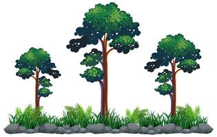 Isolerat träd på vit bakgrund