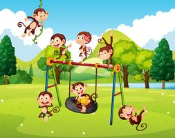 Many monkeys in the park