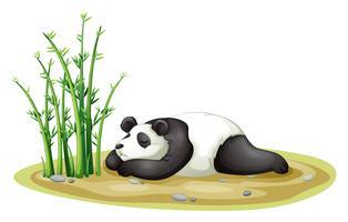 een panda