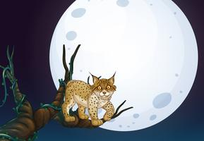 Um gato selvagem na noite escura