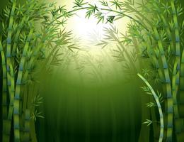 Uma floresta de bambu escuro