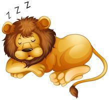 Lindo leão dormindo sozinho