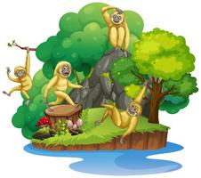 Chimpancé en la isla aislada
