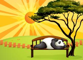 Een beer die op een bankje slaapt