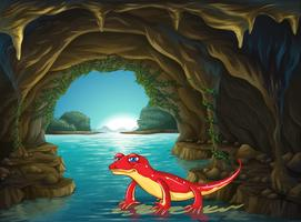 Lizard standing on water in the cave