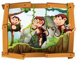 Macacos e caverna na moldura de madeira