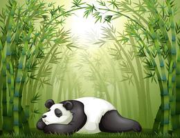 Ein Panda, der zwischen den Bambusbäumen schläft