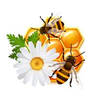 Honeycomb bee flowers emblem vector
