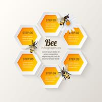 Bee infographics steps