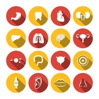 Icone degli organi umani