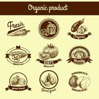 Conjunto de banner de bosquejo de verduras