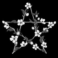 Pentagram sign made with branches from a blooming tree. Hand drawn botanical white blossom on black background.