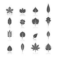 Pflanzenblätter schwarz Icons Set