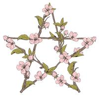 Pentagram sign made with branches from a blooming tree. Hand drawn botanical pink blossom on white background.