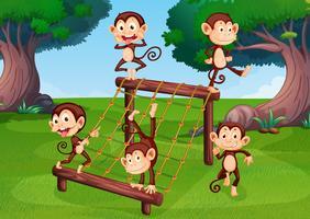 Un grupo de monos jugando en el patio