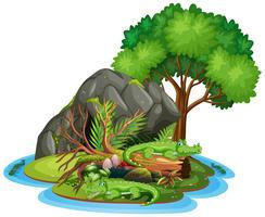 Krokodil i grottan isolerad