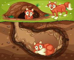 una familia de zorros viviendo bajo tierra