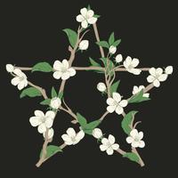 Pentagram sign made with branches from a blooming tree. Hand drawn botanical white blossom on black background. vector