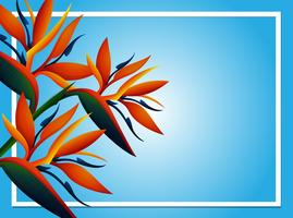 Blue background template with birdofparadise flower