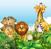 Happy wild animals in forest