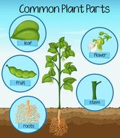 Peças de plantas comuns da ciência
