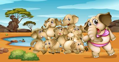 Elefantes pelo poço