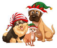 Três cães fofos com chapéus de bobo da corte