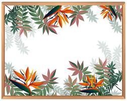 Paradies-Vogel-Blumen-Leerzeichen Temoplate