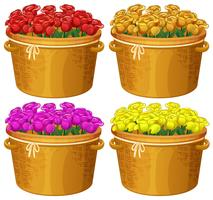 Four baskets of roses in different colors