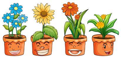 Fyra krukor av blommor