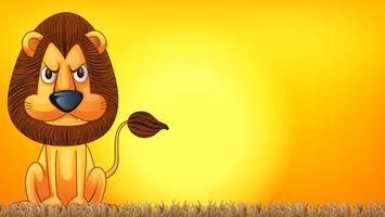 Un lion au coucher du soleil