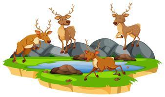 Gruppo di cervi allo stagno