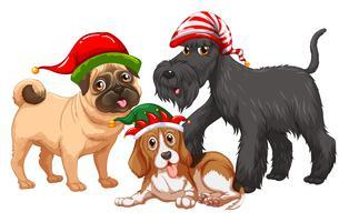 Weihnachtsmotiv mit Hunden, die Weihnachtsmützen tragen
