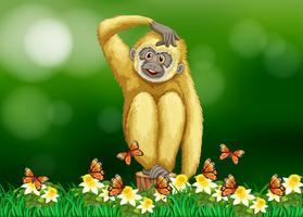 Weißer Gibbon, der auf Gras sitzt