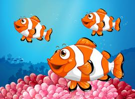 Three clownfish under the ocean