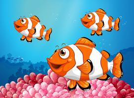Tre pesci pagliaccio sotto l'oceano
