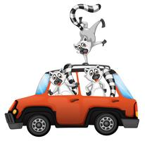 Lemur in a car on white backgroubd vector