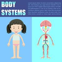 Body system diagram of girl