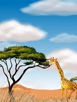 Giraf die op het gebied loopt
