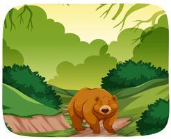 Um urso na floresta