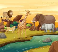 Wilde dieren op de oever van de rivier