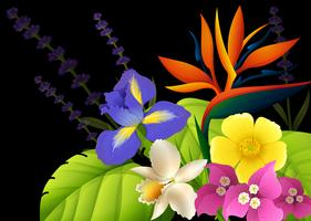 Different types of flowers on black background vector