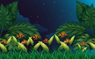 Nature scene with bird of paradise flowers vector