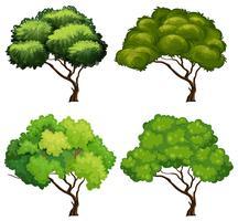 Vier Arten von Bäumen