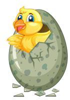 Lilla chick kommer ut ur grått ägg
