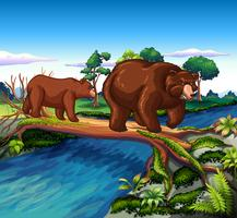 Two bears walking cross the river